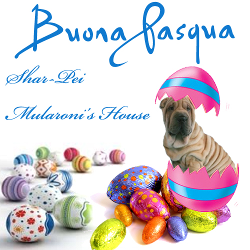 Buona-Pasqua-Shar-pei